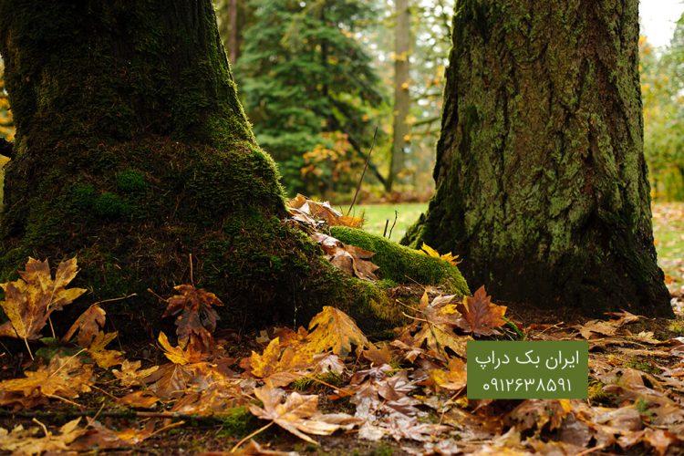 پاییزی