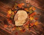 خرید بک گراند پاییز