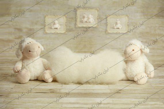 بک گراند نوزاد گوسفند