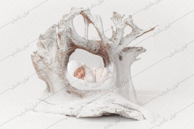 بک دراپ نوزاد تنه درخت برفی