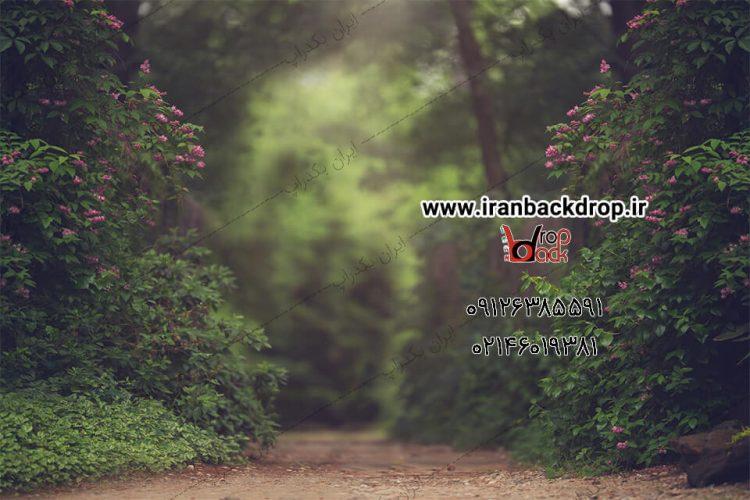 بک گراند جنگل